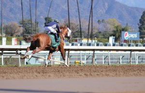 California Chrome 20