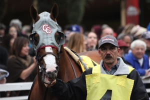 California Chrome 5