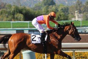 Beholder wins race 7 (8)