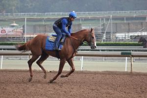 IMG_8688 - Baffert - Lord Nelson