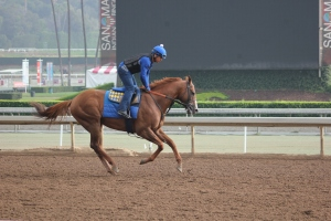 IMG_8689 - Baffert - Lord Nelson