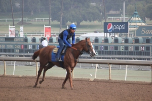 IMG_8720 - Baffert - Lord Nelson