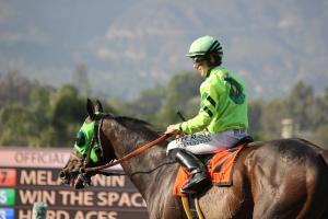 Melatonin - Joseph Talamo - winner race 9 (7)