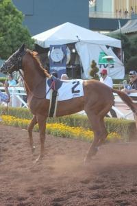 Shehastheritestuff - race 9 - 6.18.16 (2)