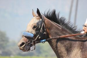 Souper Knight - after race 4