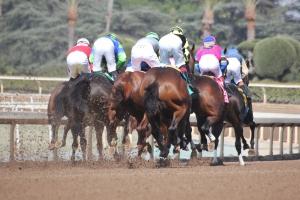 Start of race 7 (18)