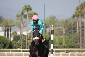 California Diamond - Edwin Maldonado - winner race 8