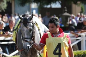 Silver Assault - race 8- Santa Anita Juvenile - 7.9.16 (2)