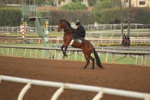 img_3228-oneill-unnamed-silar-rules-square-eddie-colt-1