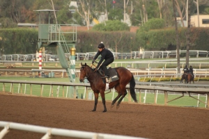 img_3229-oneill-unnamed-silar-rules-square-eddie-colt