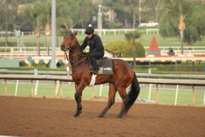 img_3230-oneill-unnamed-silar-rules-square-eddie-colt