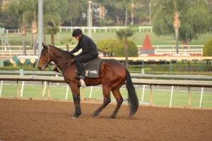 img_3232-oneill-unnamed-silar-rules-square-eddie-colt