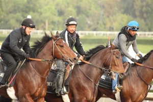 img_3238-oneill-unnamed-silar-rules-square-eddie-colt-outside