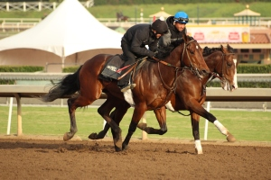 img_3253-oneill-unnamed-silar-rules-square-eddie-colt-outside