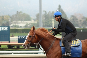 img_3231-baffert-dabster