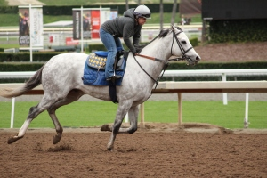 img_4677-baffert-cupid
