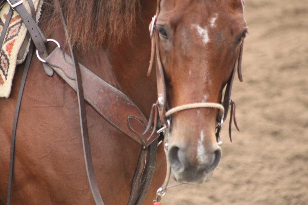 IMG_0283 - Rudy's pony