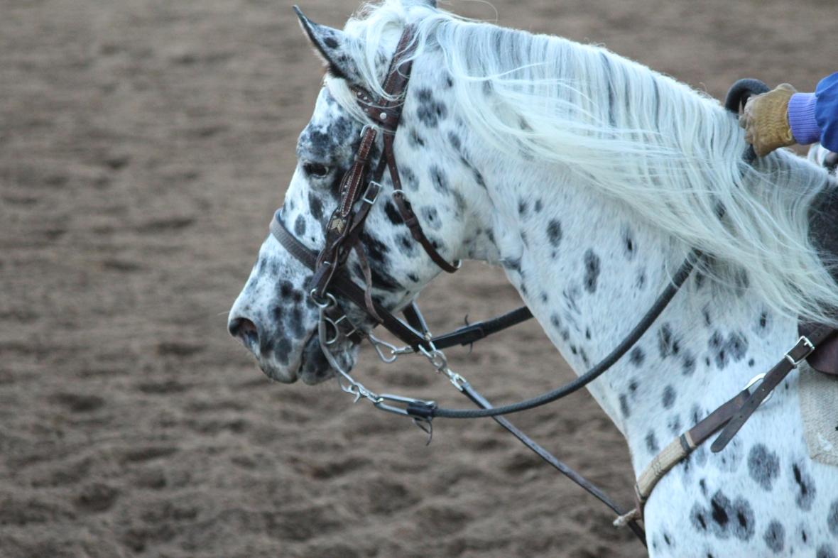 IMG_2364 - pony