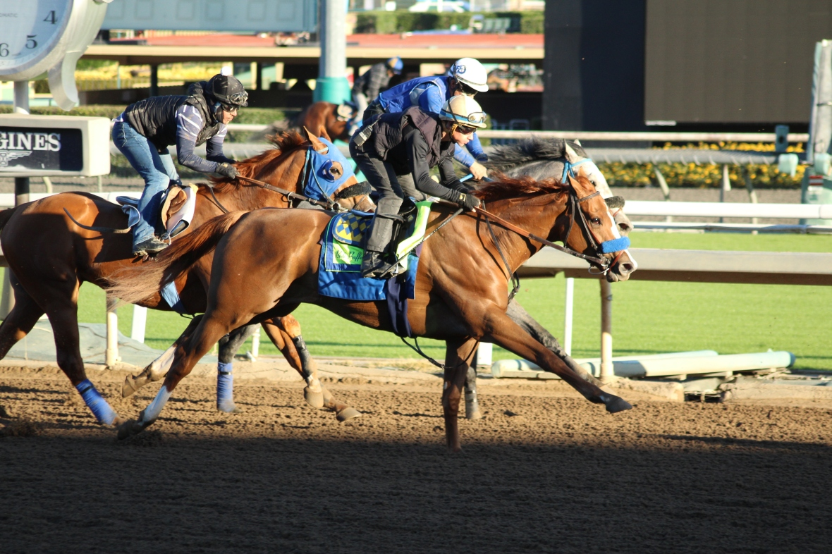 IMG_7846 - Baffert - Chasing Yesterday