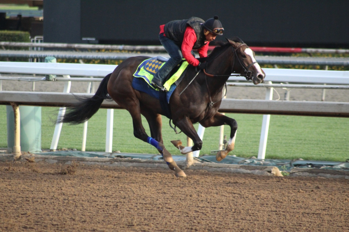 IMG_6740 - Baffert - Flor de la Mar (rail)