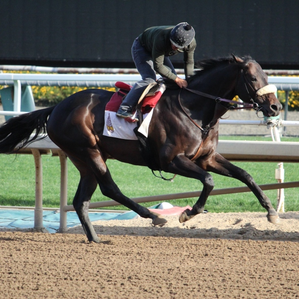 James Cassidy's Prime Attraction worked 5 furlongs in 1:02.20 this morning.