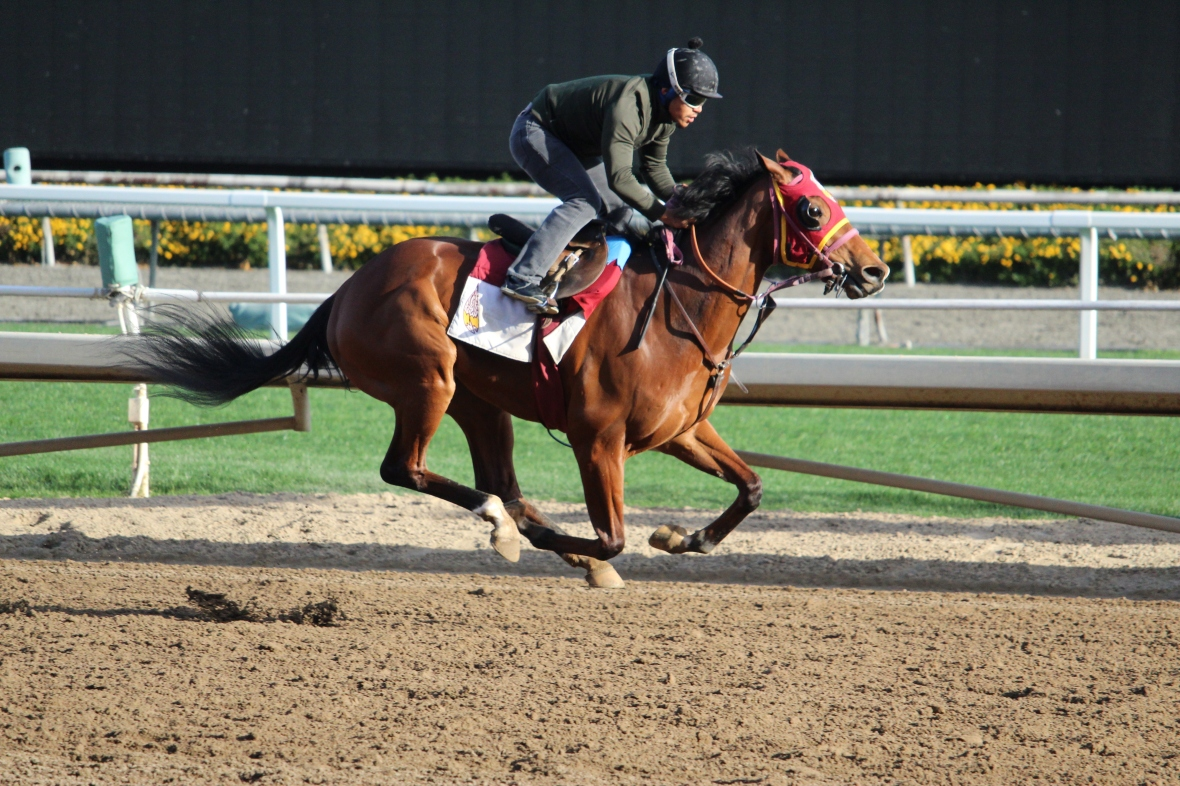 Tropical Terror worked 5 furlongs
