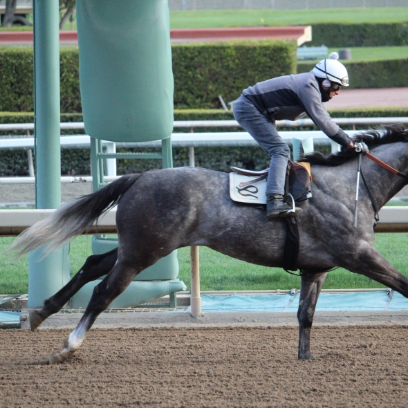 Peter Eurton's Jetovator worked 4 furlongs