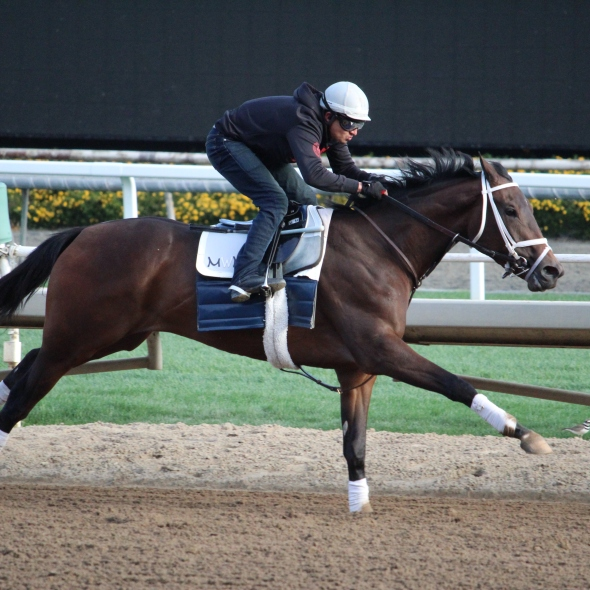 Woke Up to Aces working 5 furlongs