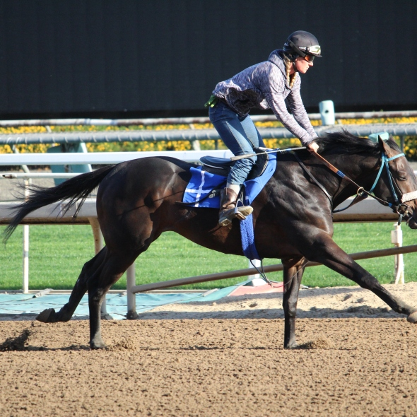 Mobou worked 5 furlongs in 1:00.80 this morning for trainer John Shirreffs.
