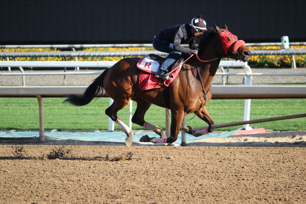 Stakes winner Queen Bee to You worked 6 furlongs in 1:13.80 this morning for trainer Andrew Lerner.