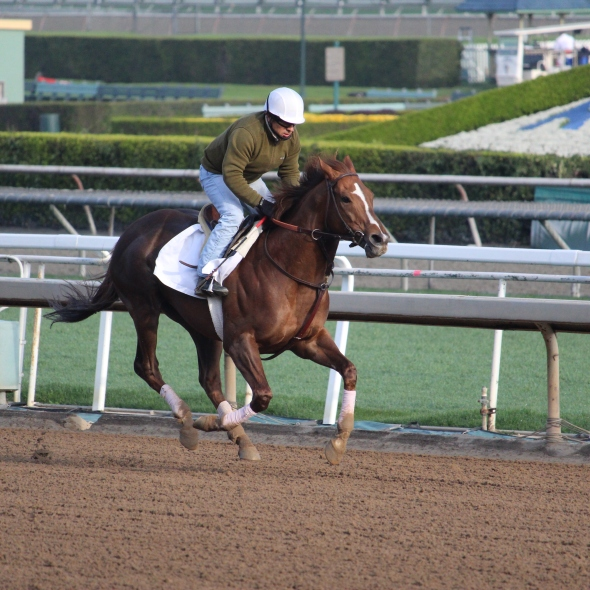 Richard Mandella's Klondike Creek worked 5 furlongs in 1:03.40.