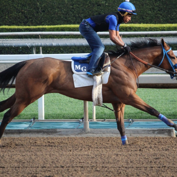 Busy Paynter worked 4 furlongs in 50.00 for trainer Mark Glatt.