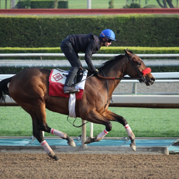 Venetian Harbor on the gallop out after working 5 furlongs in 1:00.40 for Richard Baltas.