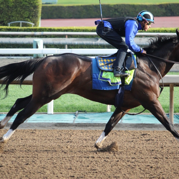 Auberge worked 4 furlongs in 50.60.