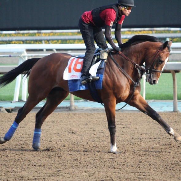 San Felipe Stakes hopeful Authentic out on the main track this morning.