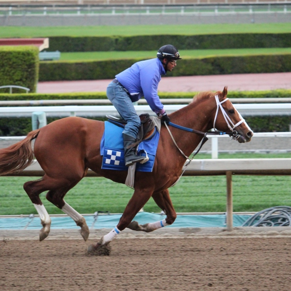 King of Speed worked 3 furlongs in 37.80 for trainer Jeff Bonde.