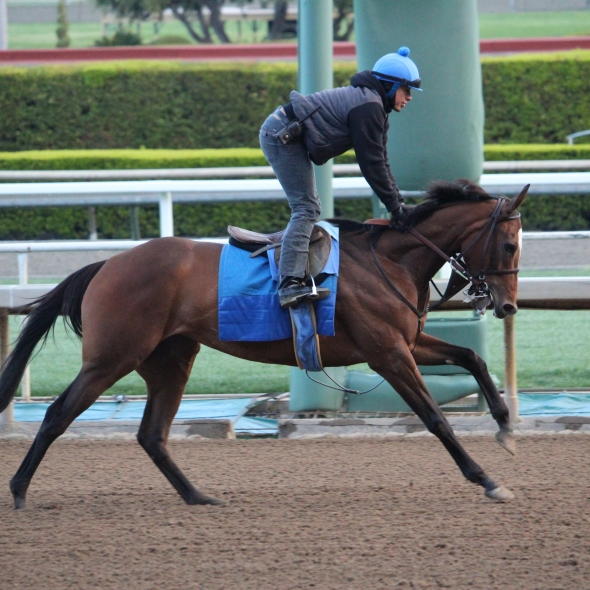 Mucho Unusual out for a spin around the track this morning.