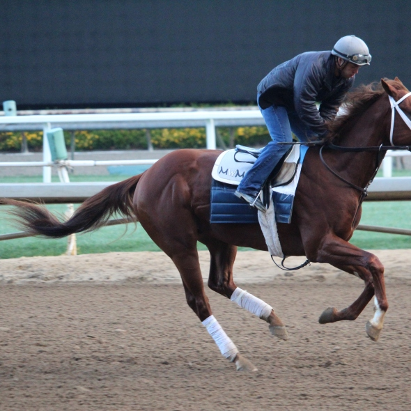 Inch galloping this morning.
