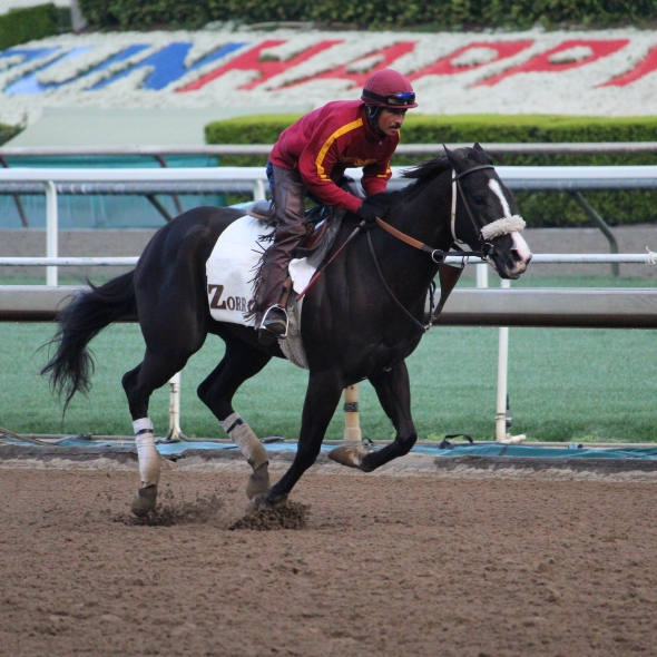 Storming Lady galloping ahead of the storm this morning.