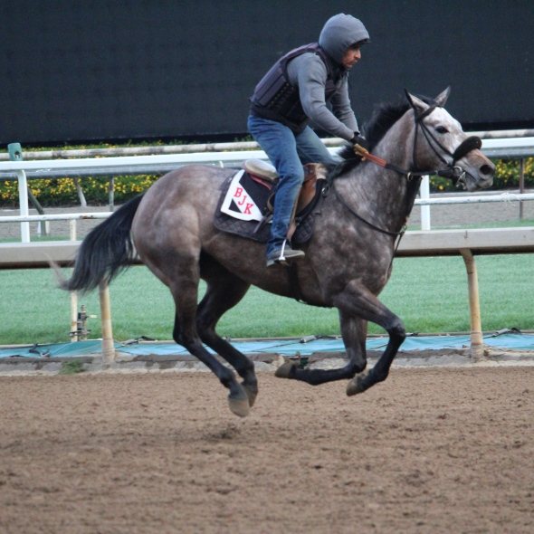 Stormin Ranger is entered in the 5th on Saturday, March 14th, at Santa Anita.