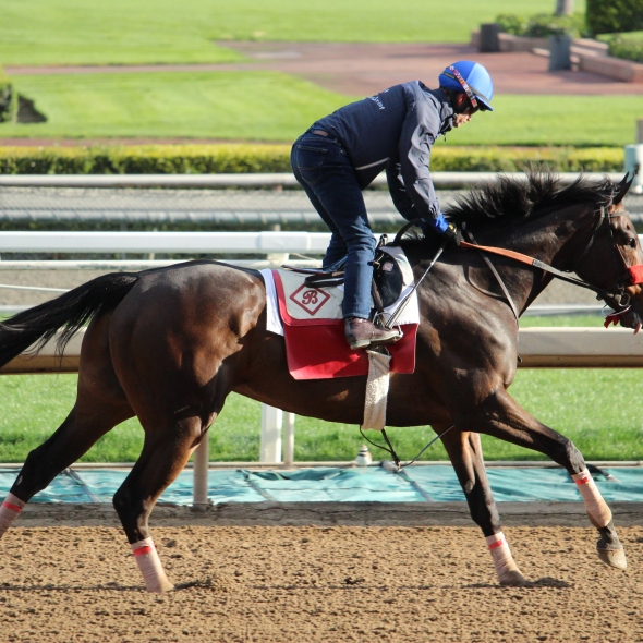 Richard Baltas' Shadow Sphinx worked 5 furlongs