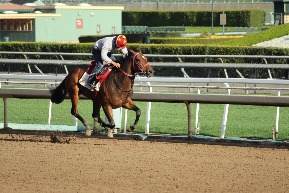 Unraced Belle of Summer worked 5 furlongs in 1:01.40 for trainer James Cassidy.